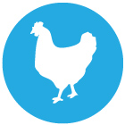 icon_chicken2